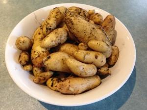Kipfler crop 1