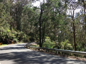 Tree ferns and forest on Black Spur, north-east of Healseville