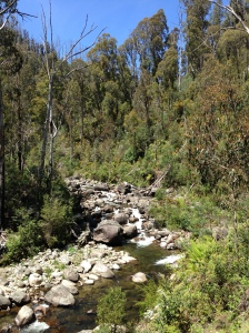 Typical scene of a mountain stream in the Australian bush