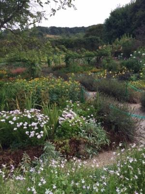 garden-4
