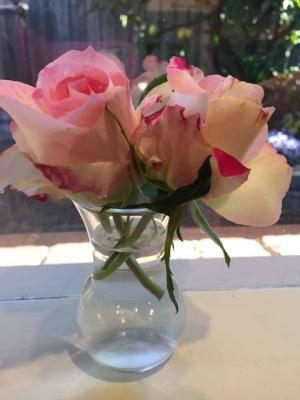 rose-2016-1