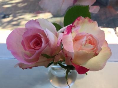 rose-2016-2